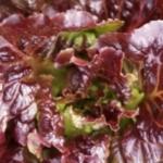 insalata foglie di quercia