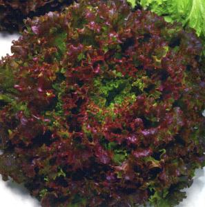insalata gentile rossa