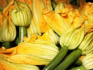 Zucchina romana